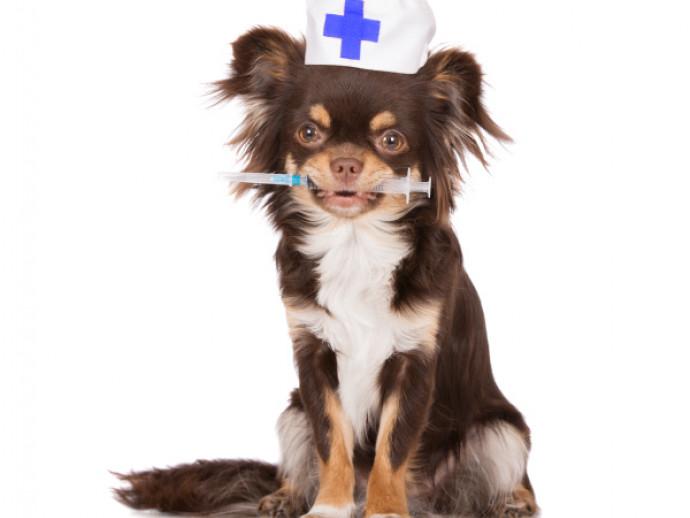 忘れちゃダメ!「ワクチン」の必要性と混合ワクチンについて