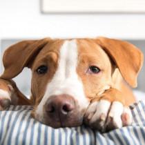 慌てず冷静に対処しよう!犬の「痙攣」について獣医師が解説