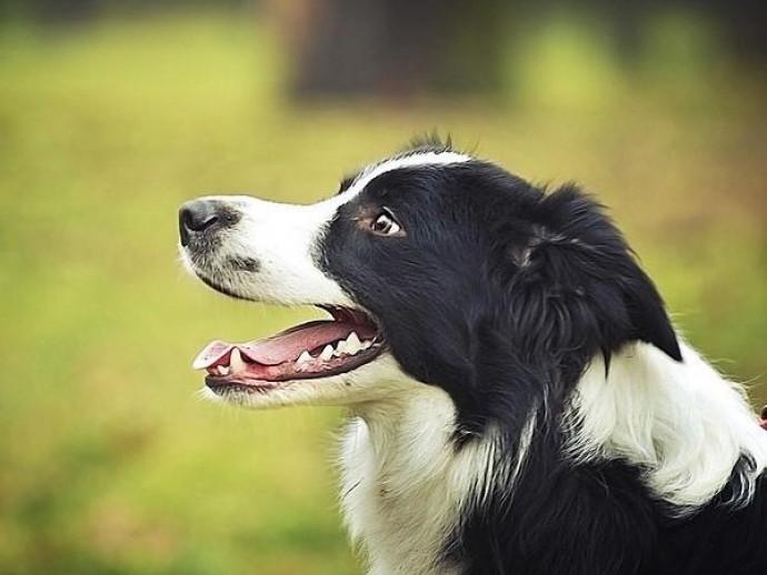 季節の変わり目は要注意!犬の「胃腸炎」は的確な判断と早めの受診がカギ