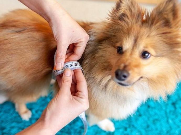 食事管理と運動を心がけよう!犬の「糖尿病」に関する基礎知識