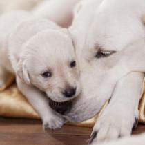 犬の病気は遺伝するの?知っておきたい「遺伝」と「病気」の関係性