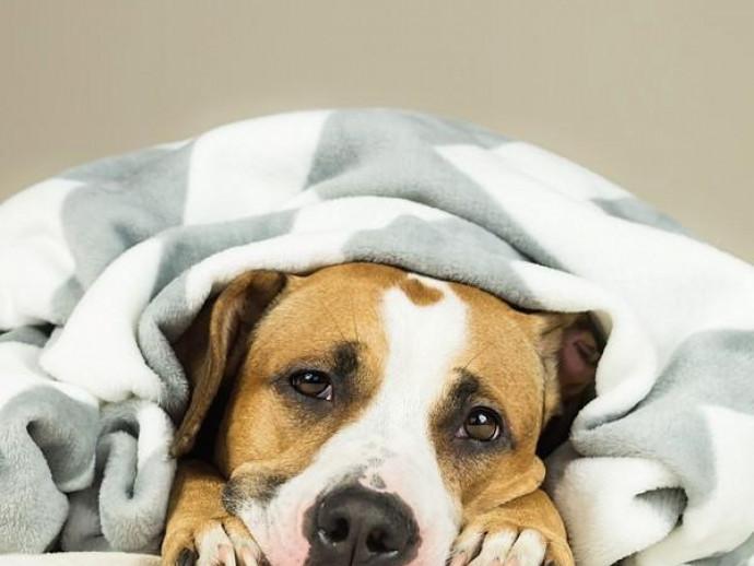 原因と症状はひとつじゃない!? 犬の「胃炎」について知っておきたいこと