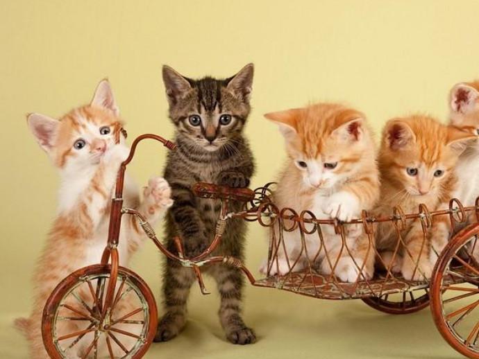 猫の「多頭飼」で病気はうつる?感染症について正しい理解を深めよう