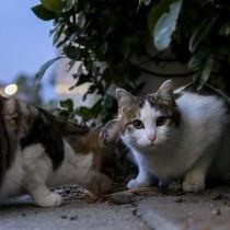 猫の殺処分減に「ふるさと納税」1,800万円を活用!和歌山市の取り組みに注目