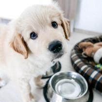 我慢できるのは月齢+1時間!? 子犬に多い「うんちの誤食」で気をつけたいこと