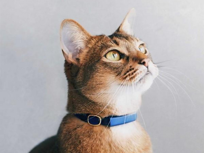 飼い主さんの不安を解消!愛猫を24時間見守れる次世代の首輪『Catlog(キャトログ)』