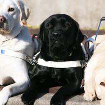 第1弾!関西盲導犬協会に聞いた盲導犬の真相!
