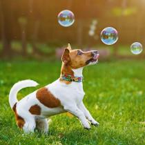 【獣医師執筆】お散歩中は強い日差しを避けてあげよう!犬への「紫外線」の影響について解説