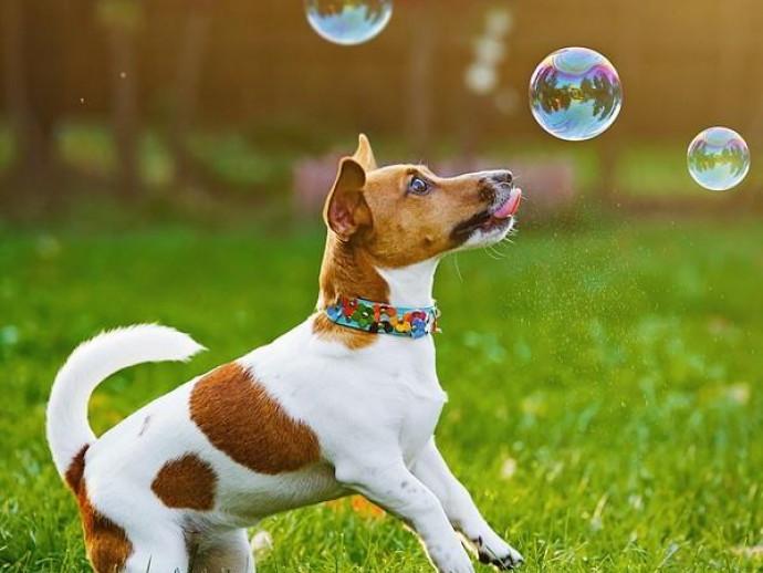 【獣医師執筆】お散歩中は日陰を作ってあげよう!犬への「紫外線」の影響について解説