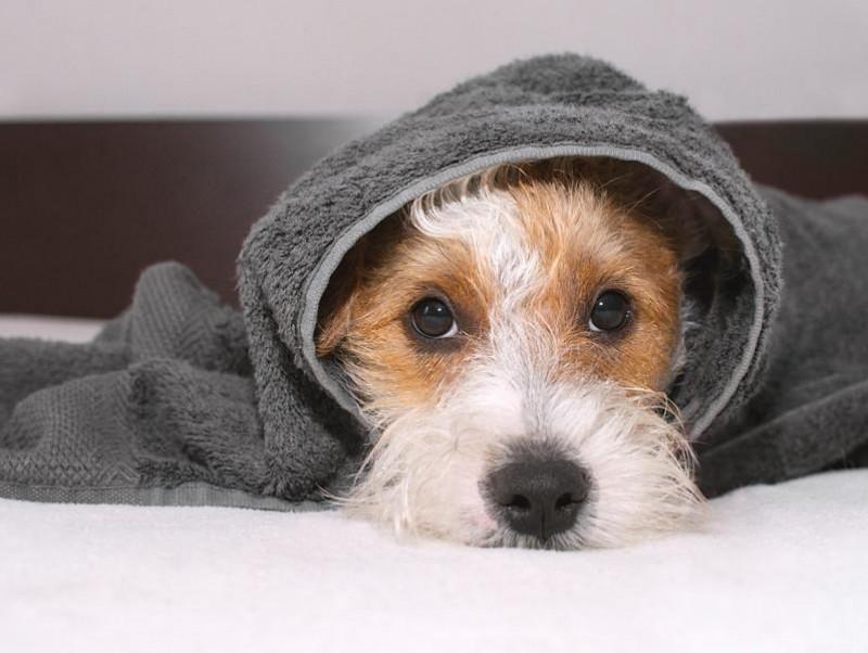 正しい知識を身に着けよう!「犬ジステンパー」について飼い主が注意すること