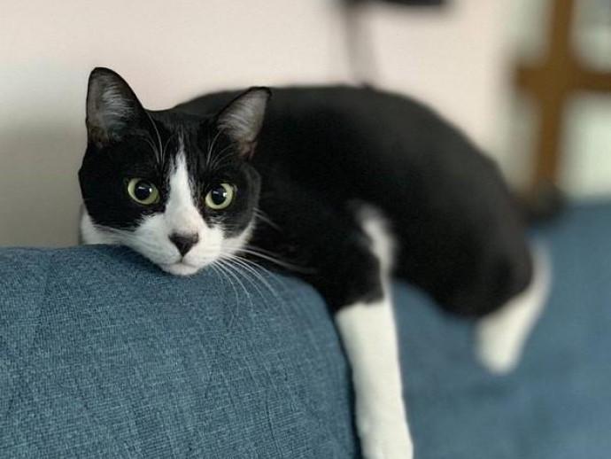 愛犬家・愛猫家の「お気に入りの1枚」~思い出エピソードを添えて~