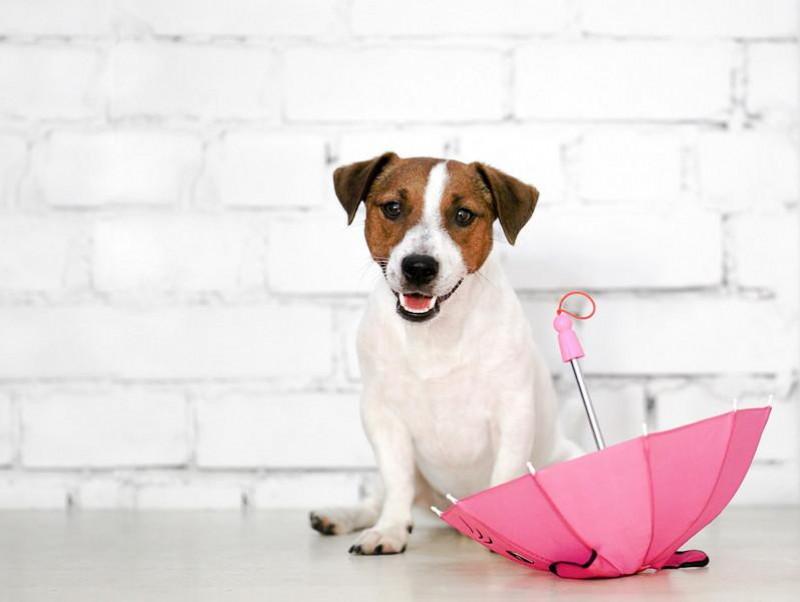 あなたの愛犬は大丈夫?梅雨に季節になりやすい「皮膚疾患」について