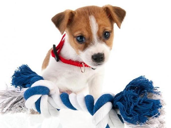 小型犬にオススメ!わんちゃん用「ロープおもちゃ」を簡単DIY