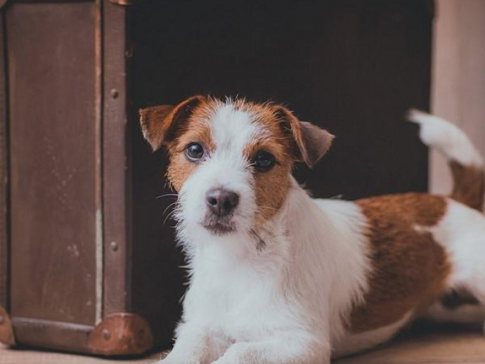 雨の日でも遊べる!愛犬と行ける「おでかけスポット」3選