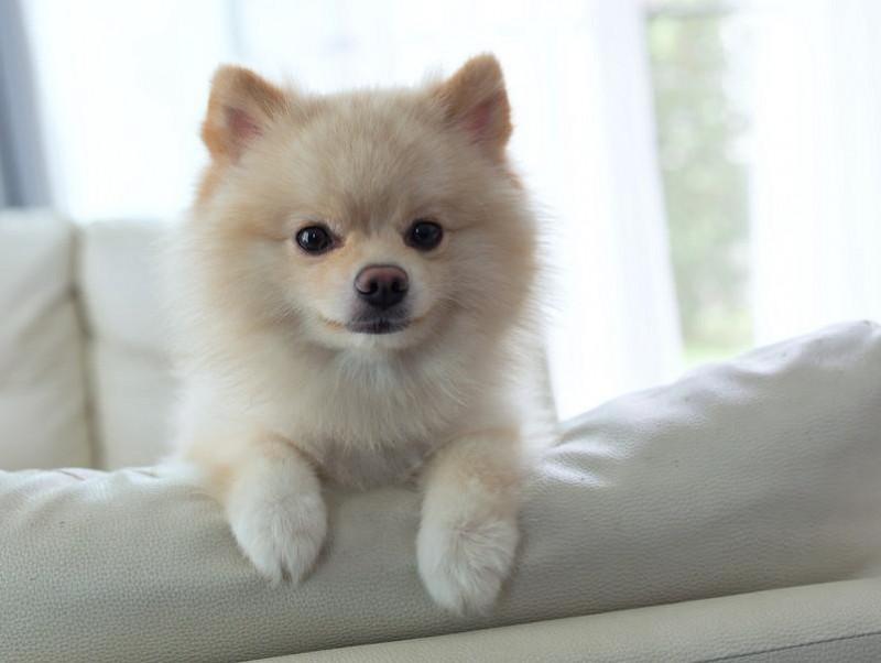 飼い主なら知っておきたい!「犬がお留守番できる時間」について