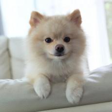 【獣医師執筆】飼い主なら知っておきたい!「犬がお留守番できる時間」について