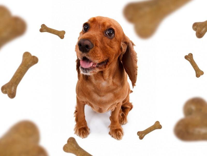私の愛犬、ごはんを食べるのが遅いかも…?その裏に隠れている秘密に獣医師が迫る
