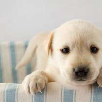 犬の目薬!愛犬が安心する目薬の差し方について