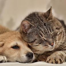 人間よりも進行が早い!気をつけたい犬と猫の「緑内障」