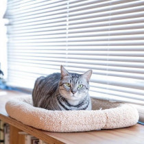 本音を直撃!「猫社員」がいるオフィスの実態~第2段~