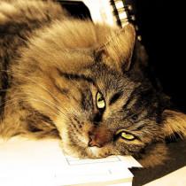 猫にとっても「湿気」は天敵!? ニオイや衛生面で気をつけるべきこと
