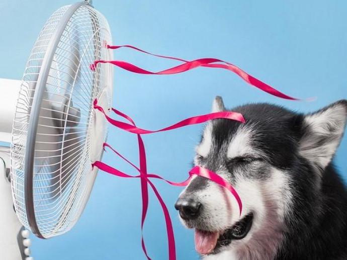 犬が苦手な「気温&湿度」ってどれくらい?エアコンを活用法も解説