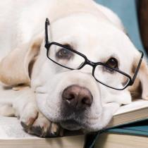 氏か育ちか、答えはクローンが教えてくれる?話題の「クローン犬」について~第2段~
