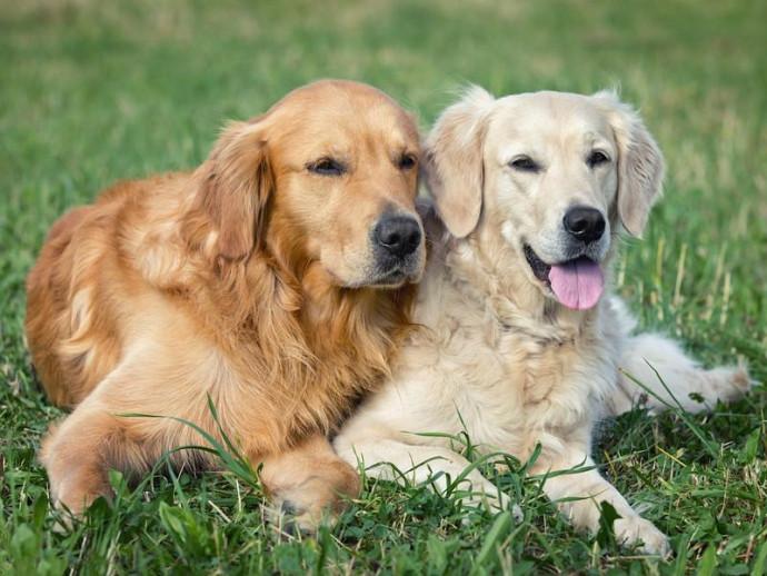 よく観察して序列関係を理解しよう!同居犬同士の「ケンカ」を防ぐ方法