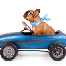 【獣医師執筆】正しい方法を守ろう!「犬と車と運転」気をつけるべきこと