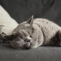 程よい距離感がGOOD!猫とのふれあいによる「健康効果」とは