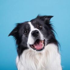 実は身近にいるかも…!「寄生虫」による犬の疾患について