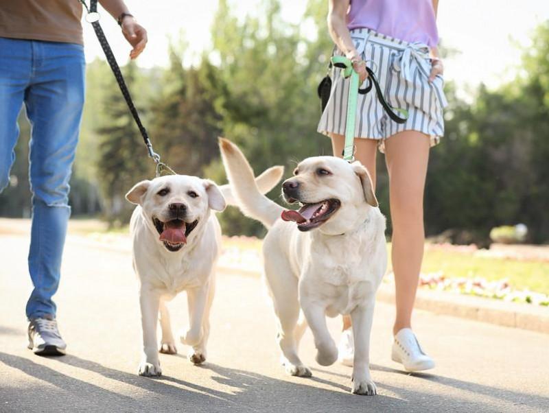 【獣医師執筆】人間と一緒で「相性」がある?犬同士を合わせるときの注意点