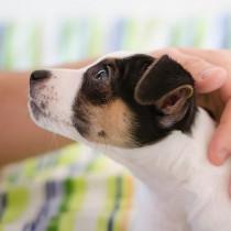 一人暮らしでも犬を飼える?抑えておきたいポイント&注意点