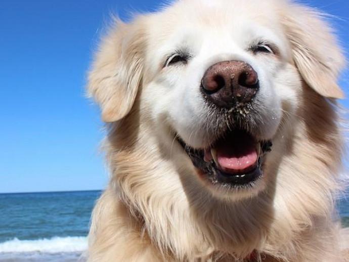 「海水浴場」は危険がいっぱい!愛犬の安全のために飼い主が注意したいこと