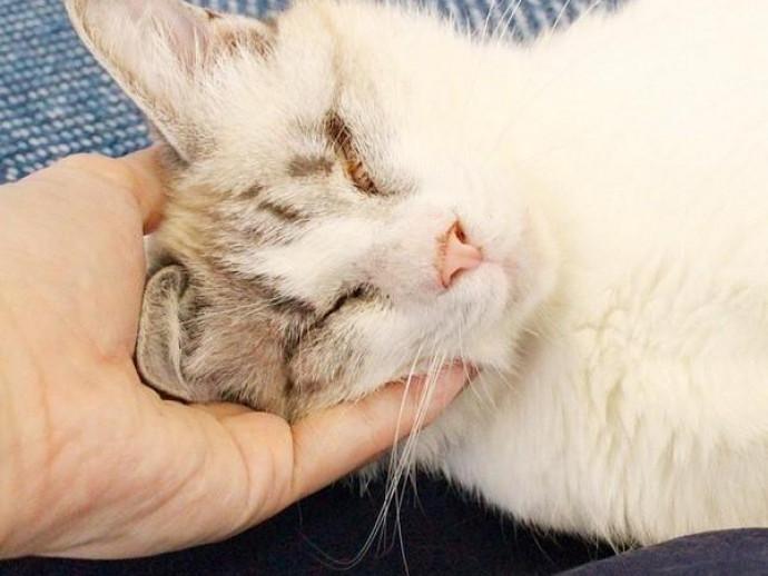 NPO法人命の応援隊が『ハワイアン保護猫カフェ'Ohana(オハナ)』をオープン!