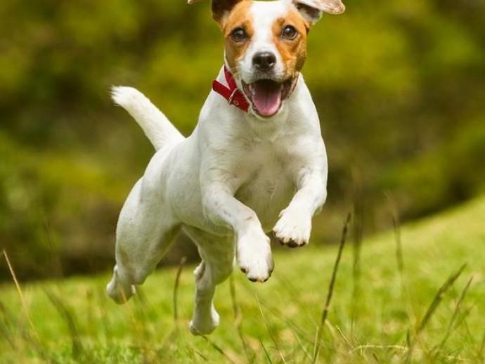 予防と対策をしよう!犬の「脱走癖」について獣医師が解説