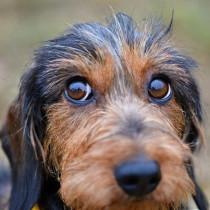 まずは原因を見極めよう!犬の「結膜炎」と「角膜炎」について
