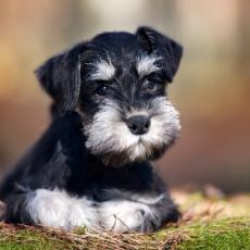 【獣医師執筆】まずは原因を見極めよう!犬の「結膜炎」と「角膜炎」について