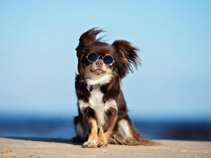 犬が食べると危険な「魚介類」ってなに?夏を迎える前におさらいしよう