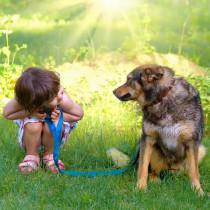 【獣医師執筆】愛犬の注意を引こう!科学的に明らかになった「効果的な話し方」とは