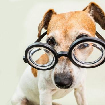 【獣医師執筆】後天性の場合はただちに病院へ!犬の「斜視」ってどんなもの?
