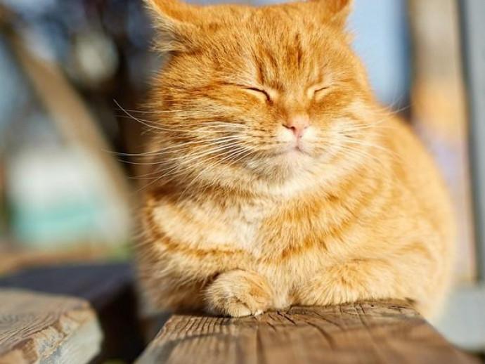 なんでいつもそこにいるの?猫が縁側や窓際で「ぬくぬく」する理由
