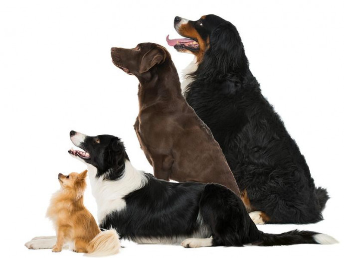 「違う犬種」を一緒に飼っていいの?相性や注意点について獣医師が解説