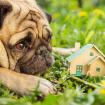 犬が暮らしやすいお家を大特集!工夫がいっぱいこだわりハウスを見てみよう