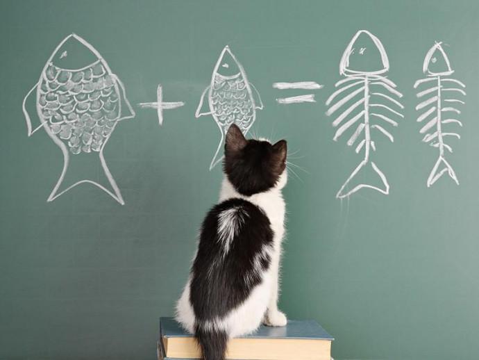 なんでそんなに夢中なの?猫が「魚」を好きな理由を獣医師が解説