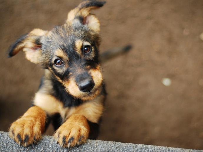 「犬は飼い主に似る」は本当?犬の性格について獣医師が解説