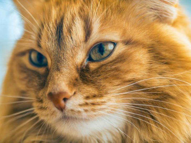 【獣医師執筆】犬猫の「ヒゲ」を切ると…?獣医師が教えるヒゲの秘密