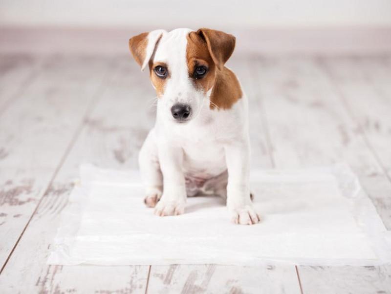 【獣医師執筆】夜中のうんちはどうしたら?「犬のトイレ」片付けすべきタイミング