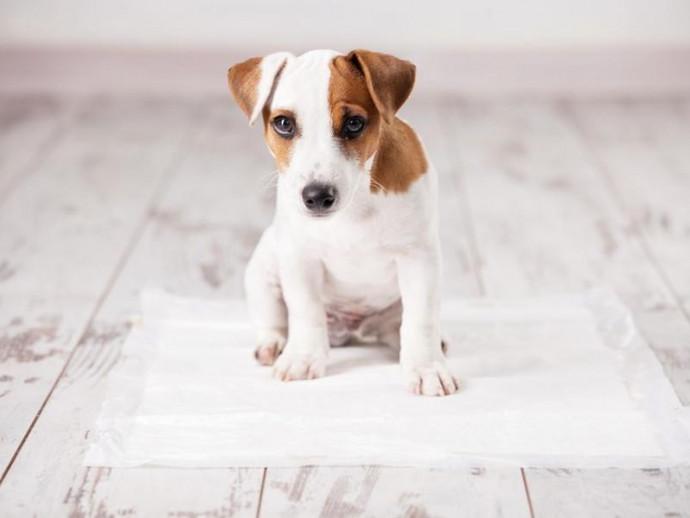 夜中のうんちはどうしたら?「犬のトイレ」片付けすべきタイミング
