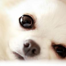 これって病気のサイン?犬の「目やに」の原因とケア方法